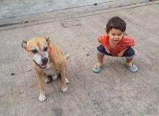 Pet allows condo for rent